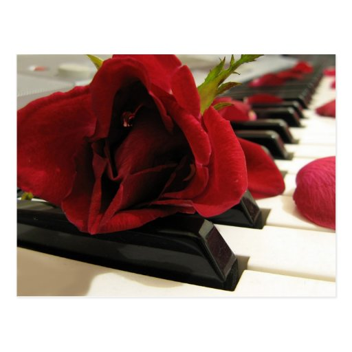 Romantic Red Rose Love Postcard