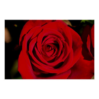 Romantic Red Rose Poster