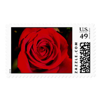 Romantic Red Rose stamps