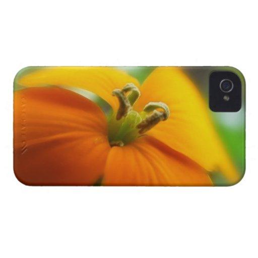 Romantic Siberian Wallflower Bloom Case-Mate iPhone 4 Case