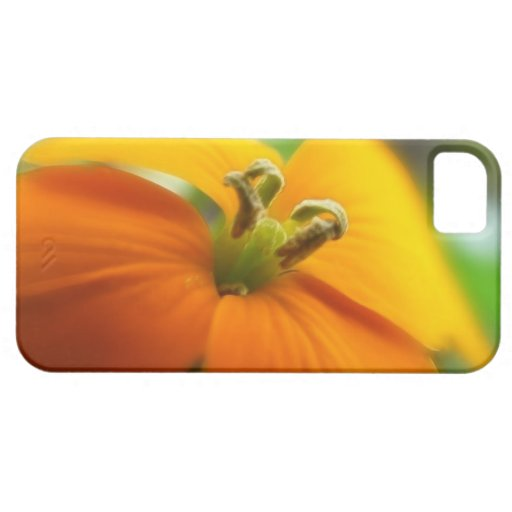Romantic Siberian Wallflower Bloom iPhone 5 Case