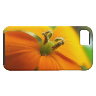 Romantic Siberian Wallflower Bloom iPhone SE/5/5s Case