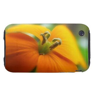 Romantic Siberian Wallflower Bloom Tough iPhone 3 Covers