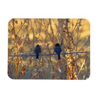 "Romantic sparrow bird couple on a wire, 3"" x 4"" magnet"