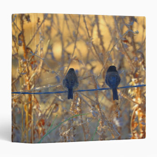 Romantic sparrow bird couple on a wire, Photo Binder