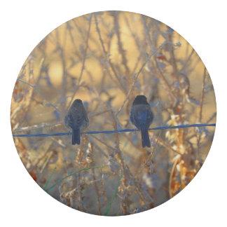 Romantic sparrow bird couple on a wire, Photo Eraser