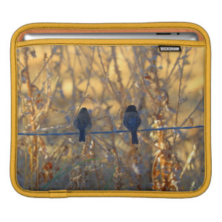 Romantic sparrow bird couple on a wire, Photo iPad Sleeve