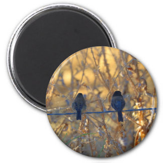 Romantic sparrow bird couple on a wire, Photo Magnet