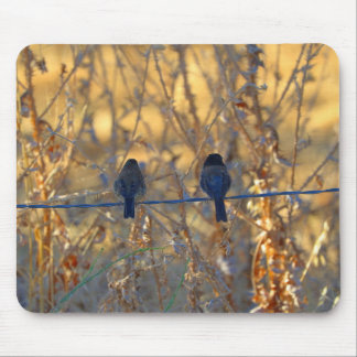 Romantic sparrow bird couple on a wire, Photo Mouse Pad