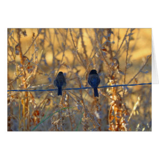 Romantic sparrow bird couple on a wire, Photo Note Card