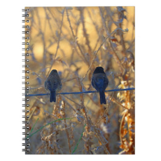 Romantic sparrow bird couple on a wire, Photo Notebook