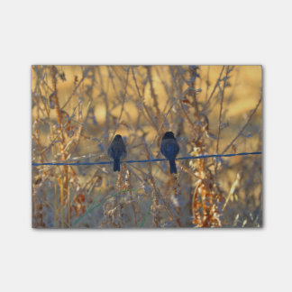 Romantic sparrow bird couple on a wire, Photo Post-it Notes