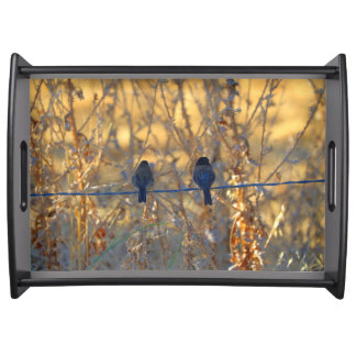 Romantic sparrow bird couple on a wire, Photo Serving Tray