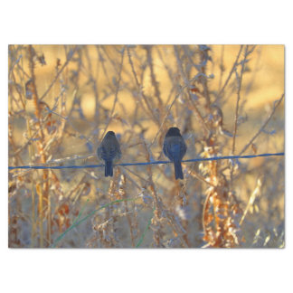 Romantic sparrow bird couple on a wire, Photo Tissue Paper
