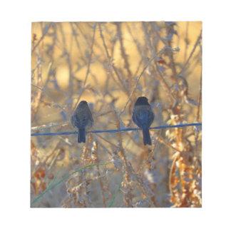 "Romantic sparrow bird couple on wire, 5.5x6"" Photo Notepad"