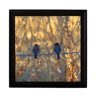 Romantic sparrow bird couple on wire, Large Photo Keepsake Box