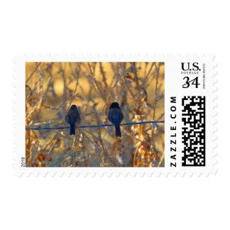 Romantic sparrow bird couple on wire, Medium Photo Stamp