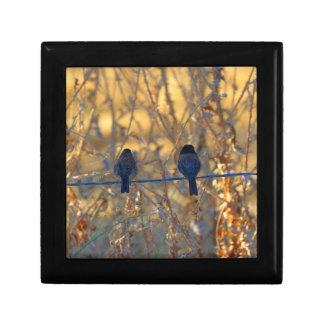 Romantic sparrow bird couple on wire, Small Photo Keepsake Box