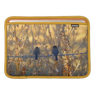 """Romantic sparrow bird couple photo, 11"""" Air Sleeve For MacBook Air"""