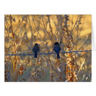 Romantic sparrow bird couple, Photo Big Greeting Card