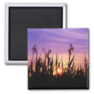 Romantic Sunset in the Reed - Magnet