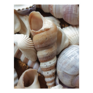 Romantic Tropical Exotic Sea Shells Beach Love Letterhead