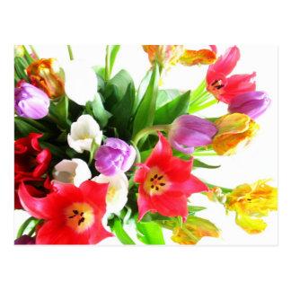 Romantic Tulip Flowers Postcard
