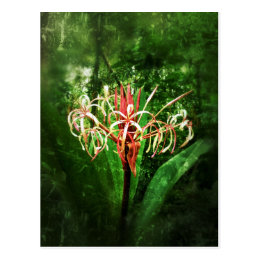 Romantic vintage red spider lily postcard
