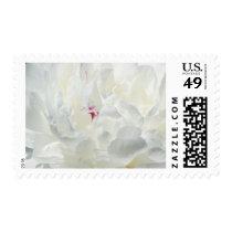 Romantic White Peony Flower Postage