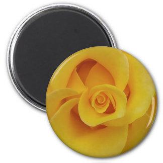 Romantic Yellow Rose Petals Magnet