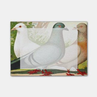 Romer Pigeons Vintage Art 2 Post-it Notes