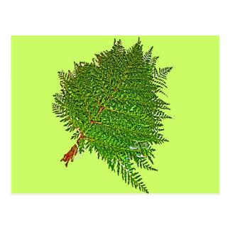 ROMERILLO PLANTS BY LIZ LOZ POSTCARD
