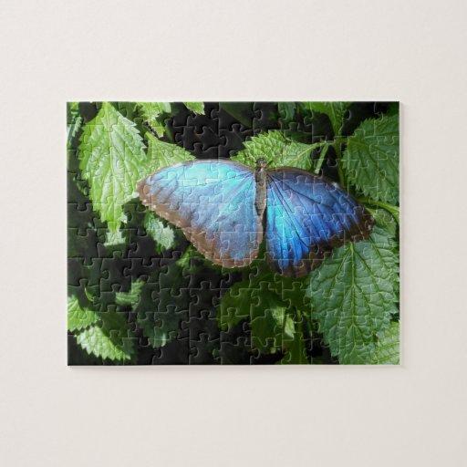 Rompecabezas azul de la mariposa