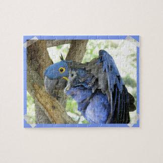 Rompecabezas azul del Macaw