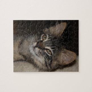 Rompecabezas caspio del gatito