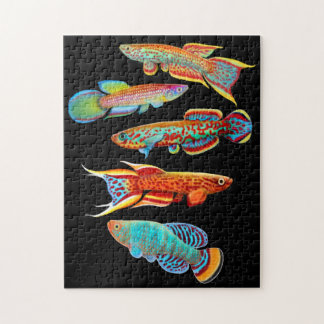 Rompecabezas colorido del Killifish del acuario