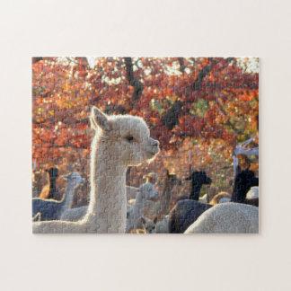 Rompecabezas de la alpaca