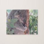 Rompecabezas de la foto de la koala