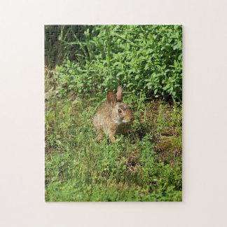 Rompecabezas de la foto del conejo