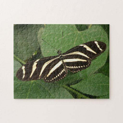 Rompecabezas de la mariposa de Longwing de la cebr