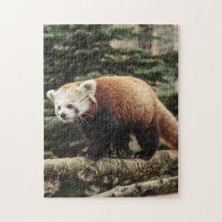 Rompecabezas de la panda roja