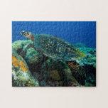 Rompecabezas de la tortuga de mar