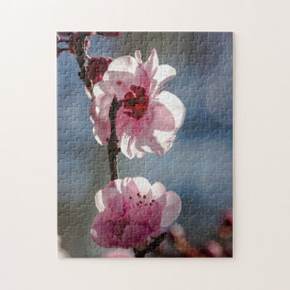 Rompecabezas de las flores de cerezo