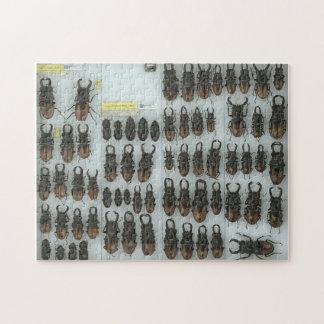 Rompecabezas de los escarabajos de macho