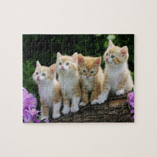 Rompecabezas de los gatitos