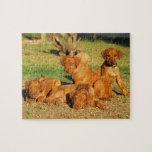 Rompecabezas de los perritos de Rhodesian Ridgebac