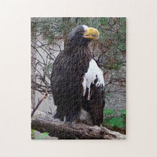 Rompecabezas de Stellers Eagle