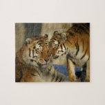 Rompecabezas del amor del tigre