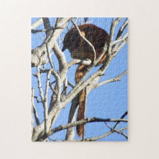 Rompecabezas del canguro de árbol