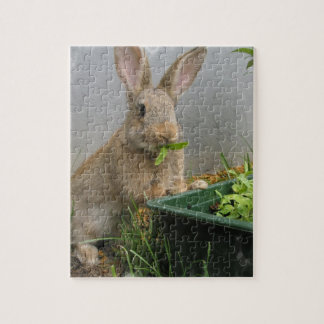 Rompecabezas del conejo de conejo de rabo blanco
